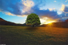 Never say (gusdiaz) Tags: sunset atardecer sundown photoshop photomanipulation digital art arte composite composition sunrays canon canonphotography nature naturephotography mountains vineyard wine relaxing tranquil peaceful cielo pasto campo country montañas camino daytrip