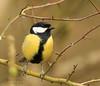Framed     explored 27.3.18  #191 (~ **Barbara ** ~) Tags: greatit bird wildbird yellow black white trees countryside uk gb branch canon7dii explored