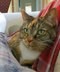 Gracie 30 March 2018 8952Ri 5x6 (edgarandron - Busy!) Tags: gracie patchedtabby cat cats kitty kitties tabby tabbies cute feline