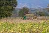 working in the field (David Mulder) Tags: myanmar burma shanstate myanmarburma iso31662mm workers