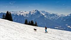 walking the dog (Heinrich Plum) Tags: heinrichplum plum fuji xe2 xf35mmf2 berchtesgadenerland bayern bavaria mountains mountain alpen alps skitour skitouring hund winter winterlandschaft snow austria österreich