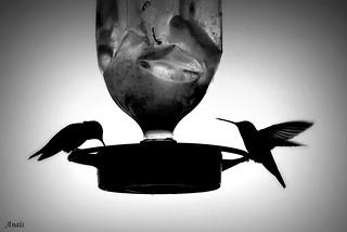 Hummingbirds 💧