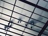 Anónimos (Lt. Sweeney) Tags: ghost fantasma sinrostro personas persons pov pointofview desdeabajo puntodevista ángulo angle perspective perspectiva arquitectura centrobotín santander cantabria difuso pisadas iphone7plus iphone móvil snapseed app edición fotografía foto