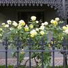 Victorian verandah (graeme37) Tags: verandah victoriana castiron fence floortiling tessellation roses yellowroses melbournehouse