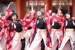 Action (Teruhide Tomori) Tags: 京都さくらよさこい 京都 日本 ダンス 衣装 踊り kyoto japan dance festival event performance japon yosakoi costume 祭 イベント