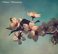 Vamos primavera...no te hagas de rogar!! (yatoma66) Tags: flores primavera