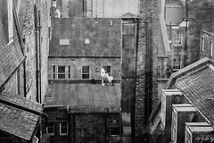 Rooftop Barber (Cycling-Road-Hog) Tags: beard blackwhite canoneos750d castlestreet citylife colour ef50mmf18stm edinburgh monochrome niftyfifty people places scotland street streetphotography streetportrait style urban