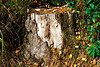 Stumped (mkk707) Tags: leicaflexsl2 summicronr50mm 35mmfilm film vintagelens vintagefilmcamera analog manualfocuslens kodakektar100 wwwmeinfilmlabde blackforest itsaleica germany germancameras