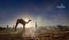 训话 -- Admonish (Albert Photo) Tags: camelfair rajasthan india asia nomadic sky animal water reflection silhouette people rest drinking admonish 训话 master owner