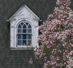 Magnolia Window Cloudy Day 6133 B (jim.choate59) Tags: magnolia house jchoate on1pics attic spring flowers candle oregon