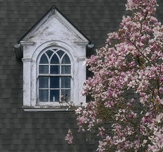 Magnolia Window Cloudy Day 6133 B
