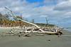 Hunting Island Drift DSC_0825_edited-1 (John Dreyer) Tags: hurricanematthew driftwood weatheredwood huntingislandsc lowcountry nikon nikond5100 copyright2018johnjdreyer photocreditjohnjdreyer