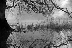 Campagne inondée (Yvan LEMEUR) Tags: inondation hiver froid campagne arbre reflets ambiance brume brouillard extérieur paysage landscape matinbrumeux