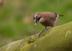 Now ... Where has the other half gone !! (Jim Crozier) Tags: jay canoneos1dx canon300mmf28l2xiii