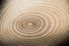 Anneaux de croissance - Growth Rings (Paul Leb) Tags: macromondays circles anneaux croissance growth rings bois wood