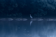 Morning blue (tetsuyakatayama) Tags: nature bird grayheron pond lake water reflection waterscape landscape japan nagasaki