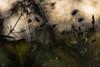 * (sedregh) Tags: wiese meadow grass gras frühling trioplan100 trioplan spring
