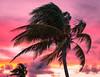 Caribbean Sunset. (PebblePicJay) Tags: sunset caribbean palmtree red dusk wind cuba canon 50mm sky