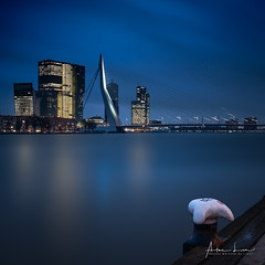 Waiting For The Blue Hour In Rotterdam II (Alec Lux) Tags: rotterdam architecture atmosphere bluehour bridge building canal city cityscape design erasmus holland houses landscape landscapephotography lights longexposure netherlands night nightscape reflection river skyline skyscraper structure urban water zuidholland nl