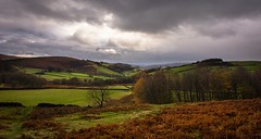 Green and orange (Phil-Gregory) Tags: nice nikon d7200 tokina tokina1120mmatx national naturalphotography naturephotographyna naturephotography nationalpark stanageedge green orange trees hopevalley valley light ngc scenicsnotjustlandscapes landscapes beauty peakdistrict