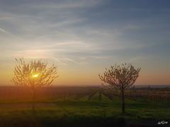 Edenkoben (WiSch | Foto) Tags: sanktmartin rheinlandpfalz deutschland de gegenlicht sonnenaufgang