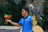 Sentosa, Singapore, November 11th 2008 (Southsea_Matt) Tags: november 2008 autmn canon 30d singapore sentosa bird parrot