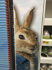 The Bunny Between the Shelves! (BKHagar *Kim*) Tags: bkhagar bunny rabbit bunnyrabbit easter easterbunny ears season spring shelves between peekabo