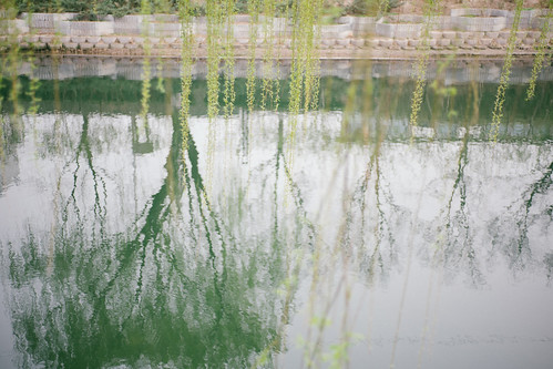 Willow inverted in the moat