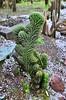 Кито, Ботанический сад (Oleg Nomad) Tags: кито эквадор ботаническийсад цветы растения орхидеи кактус зелень quito ecuador botanicalgarden flowers orchids america travel