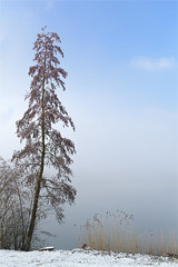 the mist clears (klaus.huppertz) Tags: löwenstein d750 nikon nikond750 nikkor mist fog nebel baum tree landschaft landscape weis white schnee snow see lake winter schilf reed natur nature outdoor 2470mmf28g