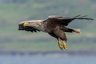 JWL0023  Eagle...