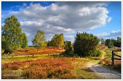 Wege durch das Radenbachtal (Don111 Spangemacher) Tags: reisen romantik wolken wege himmel landschaft lüneburgerheide niedersachsen natur naturschutzgebiet naturpark norddeutschland nordheide erika urlaub undeloh bunt kulturlandschaft pflanzen baum