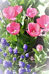 Flickr Friday - Dream (qorp38) Tags: spring red blue flowers tulips