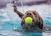 Jester (ToriAndrewsPhotography) Tags: k9 aqua all about dogs trinity park ipswich april 2018 swimming pool jump splash photography andrews tori