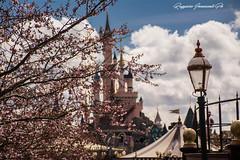 disneyland paris (baridue) Tags: disney disneyland castello waltdisney bokeh colori primavera spring luce sky paris parigi