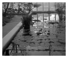Botanical Garden, Padua (marcobertarelli) Tags: botanical garden padua padova monochrome monochromatic bw flora