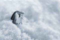 Resistance (Natalia Medd) Tags: flower snow snowdrop spring bw monochrome fragile
