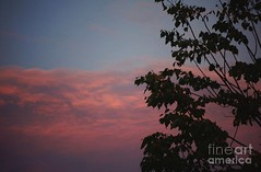 Scary red sunset with tree (Aliceheartphoto) Tags: fineartamericaartist photography camera fineartamerica faa photographer pixelsartist pixels clouds cincinnatiphotography ohio sky tree sunset pretty red horror eerie creepy