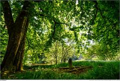 Am Krötenteich (marcus juettner) Tags: wald neustadtbeicoburg bayern deutschland de forest baum tree green gras wood holz