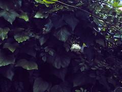 Film Gain Test (masaru_yamamoto) Tags: hasselblad x1d x1d50s