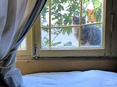 Un visiteur matinal (Raymonde Contensous) Tags: républiquedarménie arménie erevan yerevan villadelenda hôtel interieur aménagement chat animal cat gato