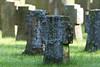 Waldfriedhof Lauheide - Ehrenfriedhof (kalakeli) Tags: cemetery friedhof waldfriedhoflauheide münster telgte