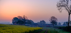 One morning in May (Peter Leigh50) Tags: sun sunrise fujifilm fuji xt2 yellow field farmland farm farming trees building path track sky mist misty