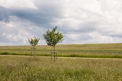 Geschwisterlich (Vitatrix) Tags: bäume felder schwäbischealb badenwürttemberg pflanzen himmel wolken horizont