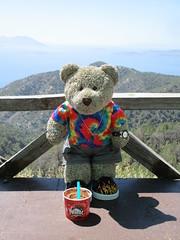 Panoramic view 12/51 (pefkosmad) Tags: tedricstudmuffin teddy ted bear holiday holibobs animal cute toy cuddly soft stuffed fluffy plush pefkos pefki pefkoi rhodes rodos greece greekislands griechenland hellas stellahotel