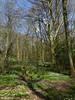 Spring woodland (ExeDave) Tags: p1120502 newfieldspring wood upper mossvalley woodlands naturereserve nr derbyshire sheffield sheffieldrotherham wildlifetrust srwt n e midlands