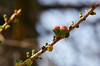 A blessed time (GlebLv) Tags: sony a6000 sel55210 spring april bloom blossom plant revival