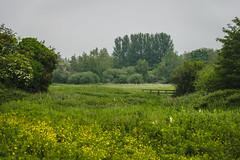 Walk around Northbourne (Jean Latteur) Tags: nikon d3300 18105 flowers light wooden bridge