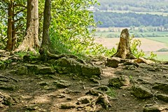 Stump on Rattlesnake Point (otterman51) Tags: borealforest canada landscape ontario ortbaldauf tree colours escarpment nature niagara niagaraescarpment ortbaldaufcom outdoors photography roots spring stumps summer trees view vista