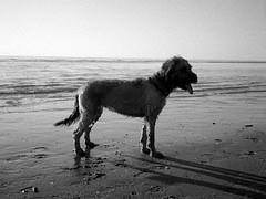 Egmond beach (25/8) Tags: egmond olympus pen ee2 agfaphoto apx100new apx100 ilfotec ilfotecddx